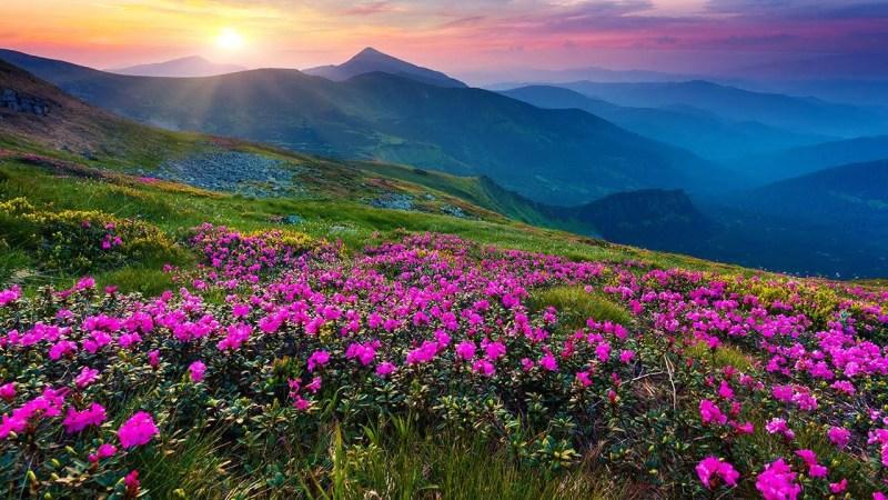 himalayan treks Valley of Flowers trek