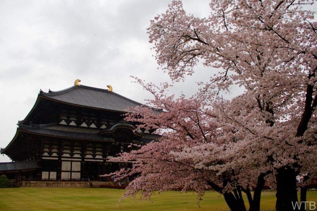 Sakura-18