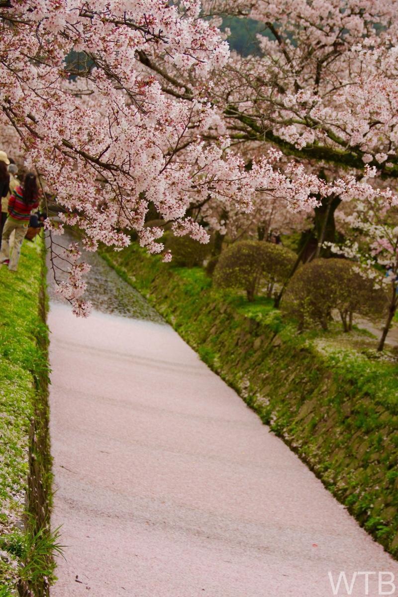 Sakura-23