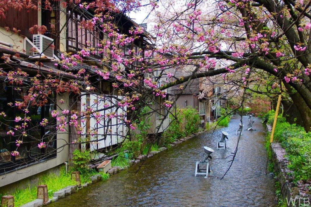 Sakura-31