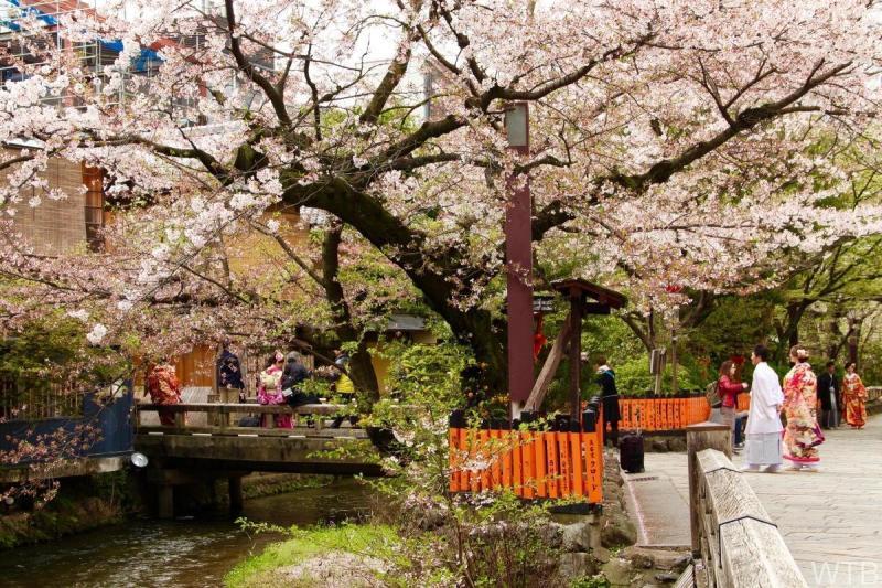 Sakura-44