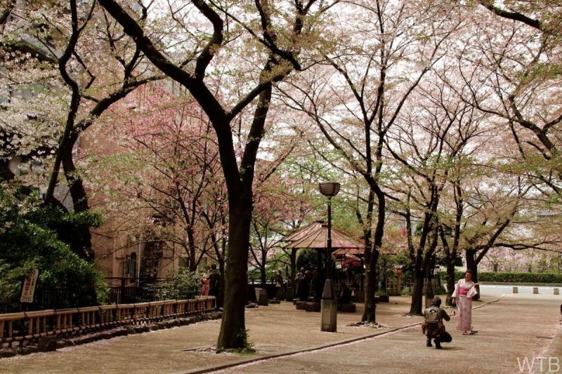 Sakura-46