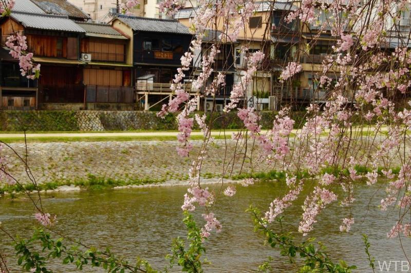Sakura-48