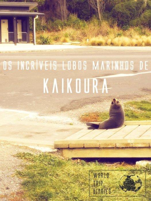 Kaikoura, na NZ, é a casa de um número enorme de lobos marinhos. Eles são animais extremamente fofos! Clique para ler mais!