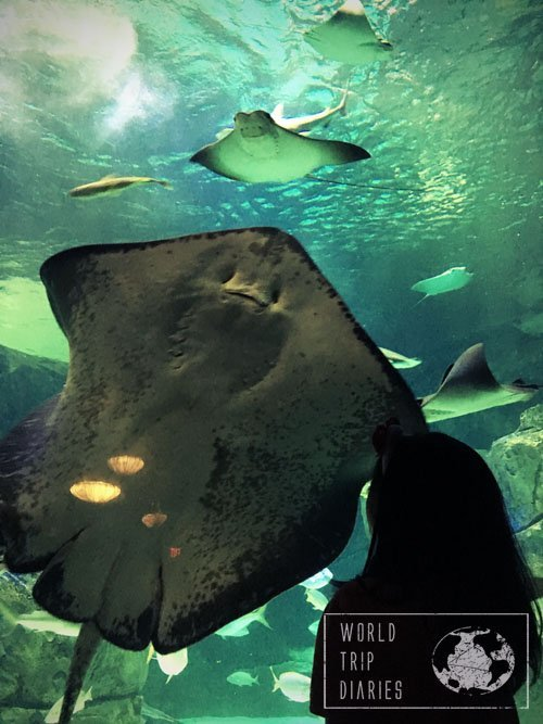 Stingray, Ripleys Aquarium, Toronto, Canada