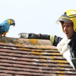 parrot swears at firefighters