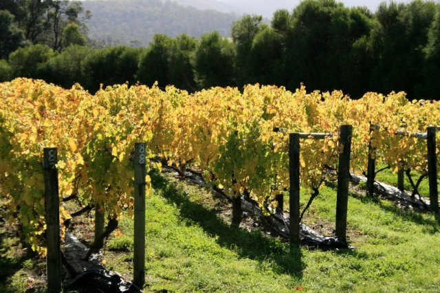Tasmania vineyards, Australia