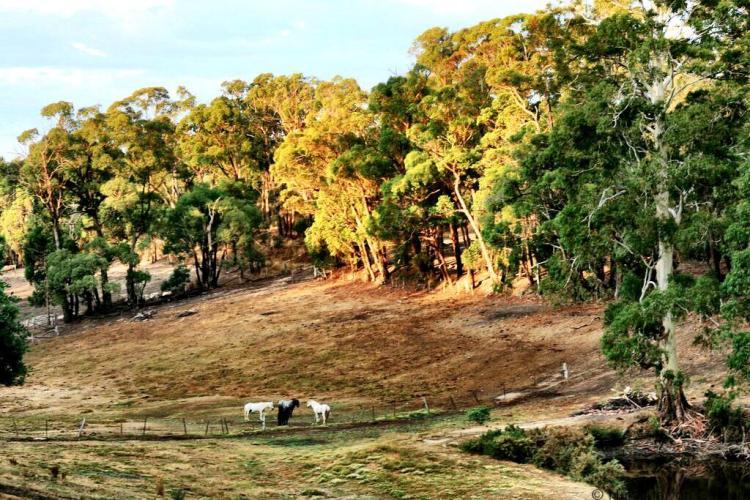 Boomerang Ranch Daylesford Victoria Australia