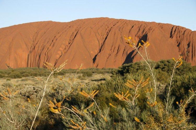 Australia wildflowers Ayers Rock Uluru