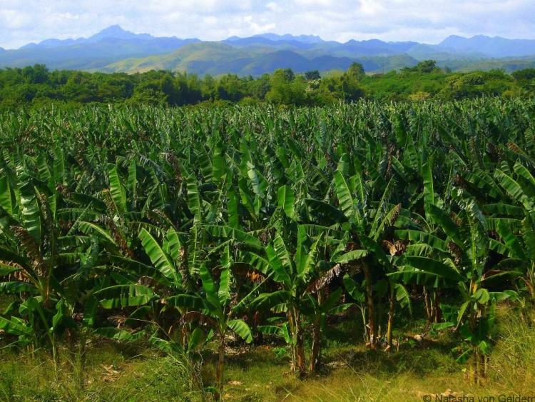 Valle de los Ingenios, Cuba