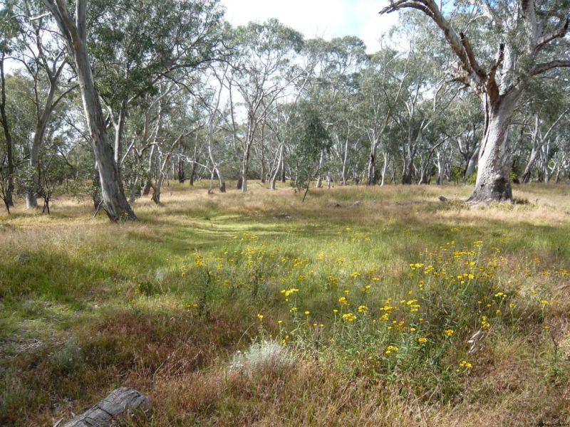 Australia bush