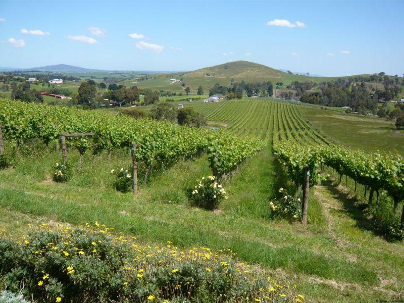 Yarra Valley vineyards, Australia