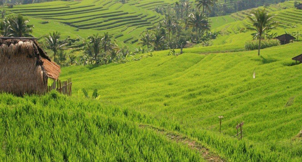 Jatiluwah rice terraces, Bali