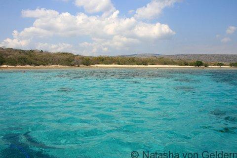 Menjangan Island diving in West Bali National Park