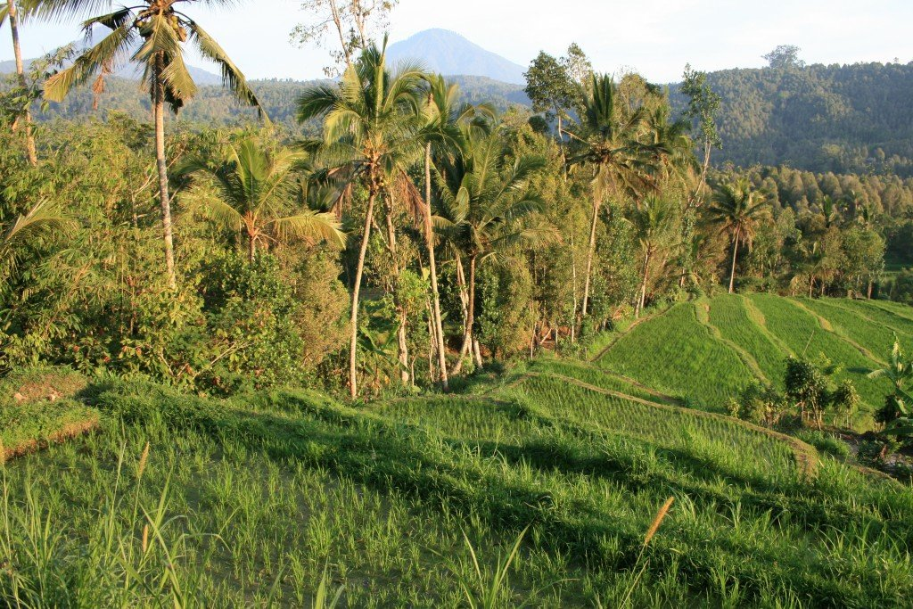 Trekking in Bali around Munduk with the clove pickers