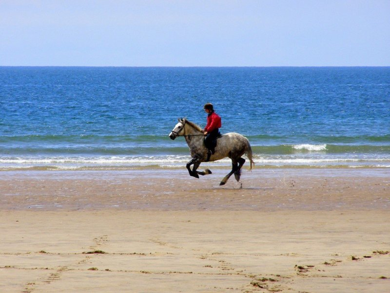Horse-Riding-Gower-Peninsula-Wales