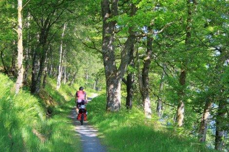 Woodland on shores of Loch Katrine, Trossachs, Scotland