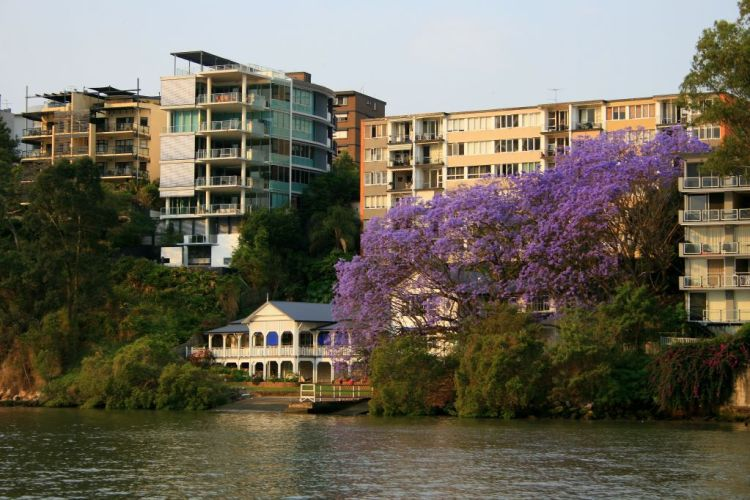 Architecture and Jacarandas in Brisbane, Australia