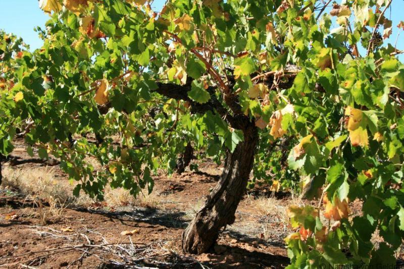 Barossa Valley vineyards, South Australia