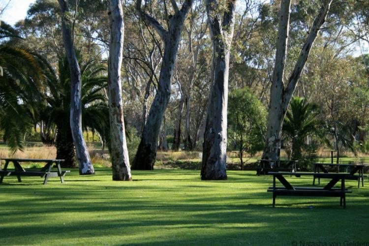 Peter Lehman vineyard, Barossa Valley, South Australia