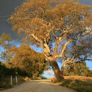 Touring the Barossa Valley, South Australia