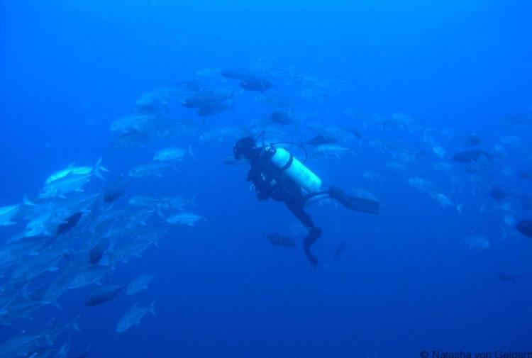 Diving holidays