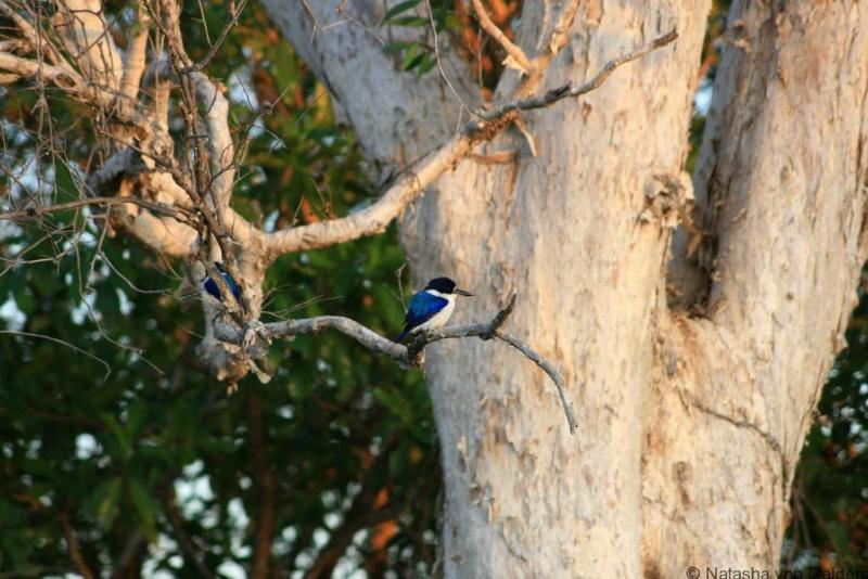 Kingfisher at Yellow Water in Ubirr sunset in Kakadu National Park www.worldwanderingkiwi.com Natasha von Geldern