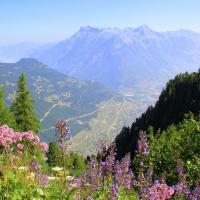 Hiking the Tour du Mont Blanc: Trient to Champex