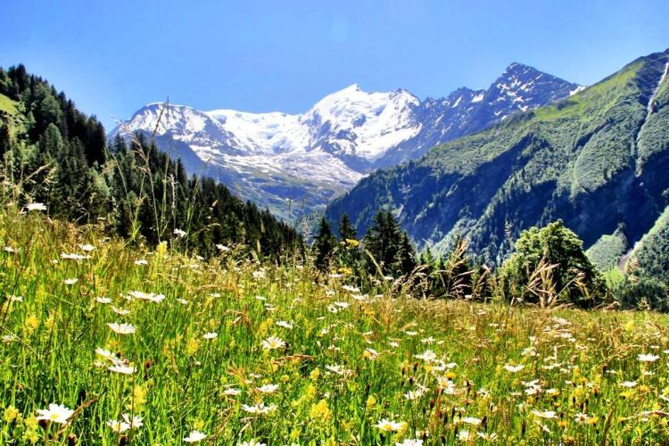 meadows-and-mountains-tmb-bionnassay