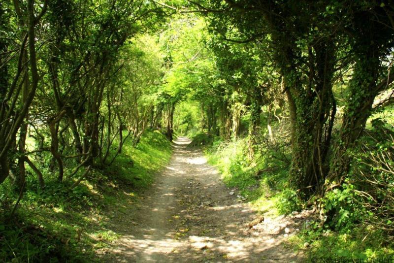South Downs Way hiking UK