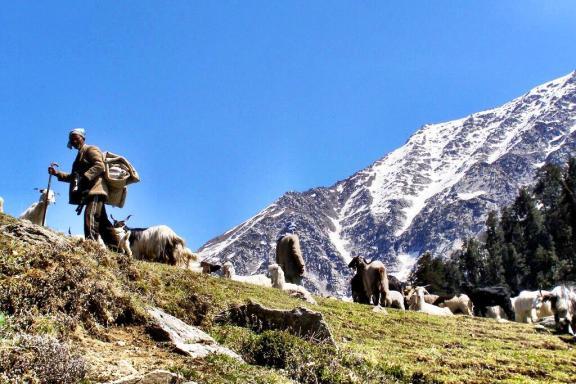 Kareri Lake multi day trek from Dharamshala India