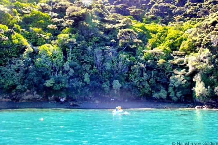 Swimming in the Marlborough Sounds New Zealand web
