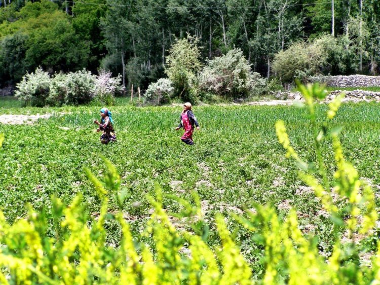 Children in the fields of the Wakhan Valley Tajikistan