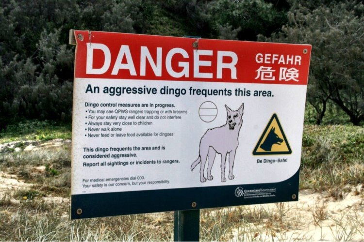 Dingo warning sign on Fraser Island Australia