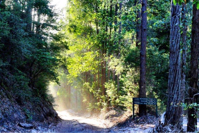 Rainforest on Fraser Island Queensland Australia