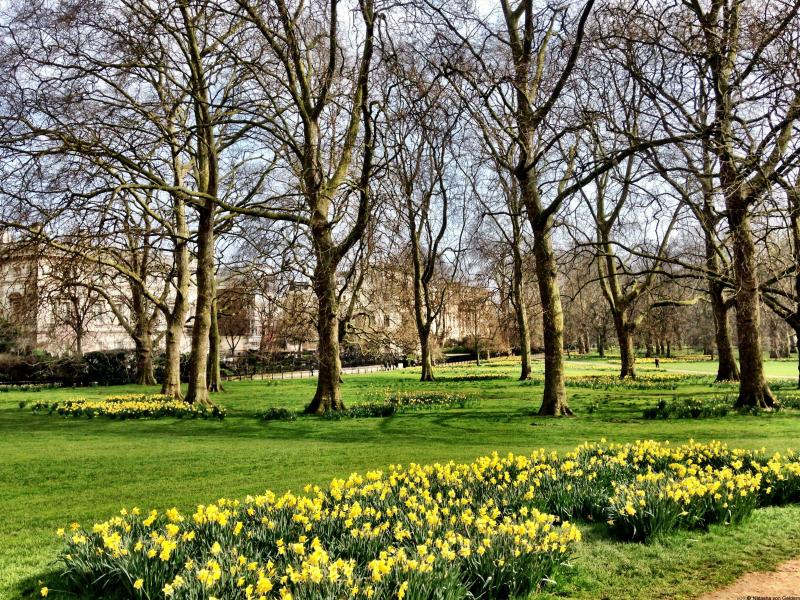 Green Park in spring things to see in London England