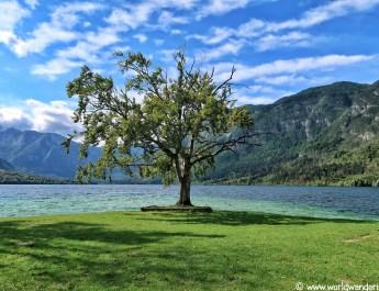 one day at Bohinj lake