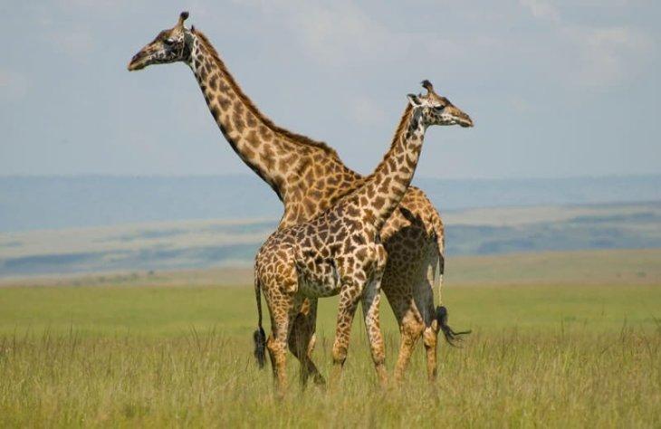 You can go on a full-blown safari and see the many animals including lions, elephants and leopards.