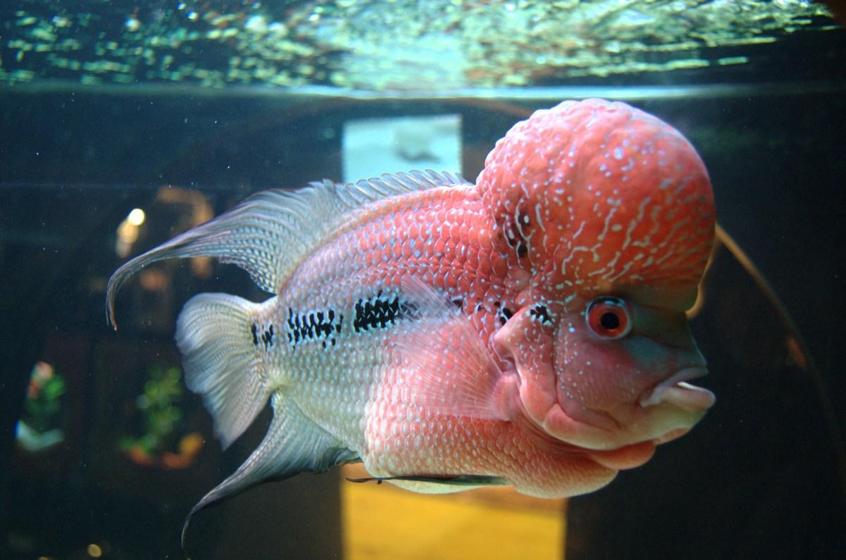 oscar fisch