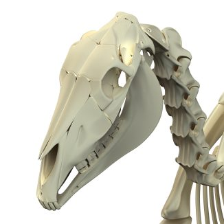 The early horsemen of Central Asia and Eastern Europe discovered a gap between the molars and incisors of the horse, and realized they could place something in this gap to control the equine