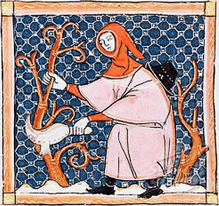 Medieval peasant trimming vines