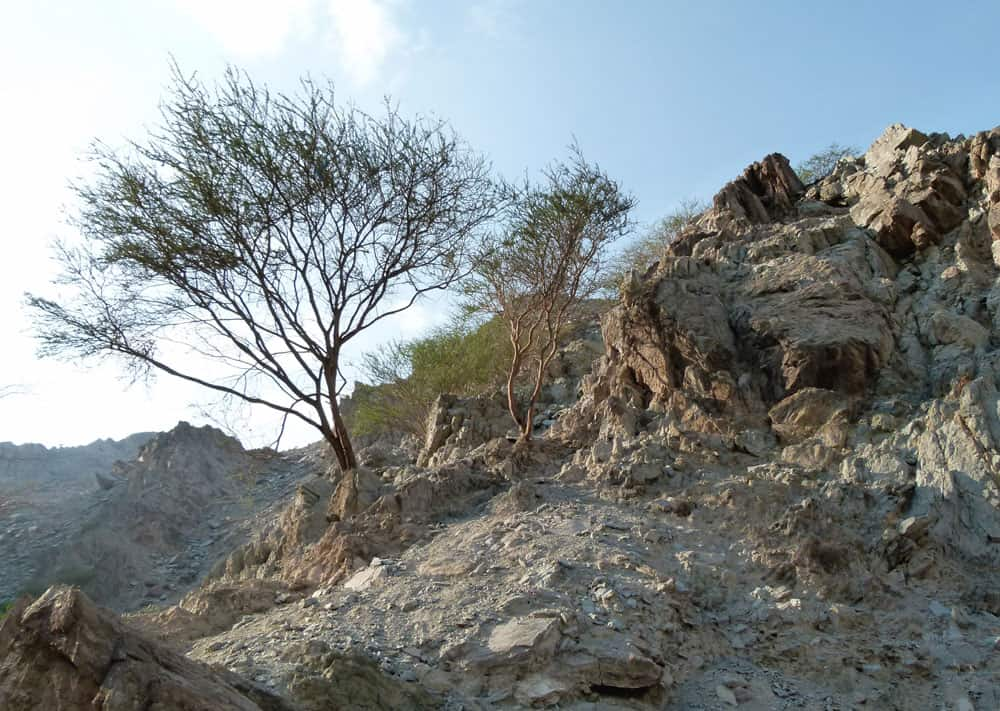 Rugged UAE countryside at Wadi Tayyibah