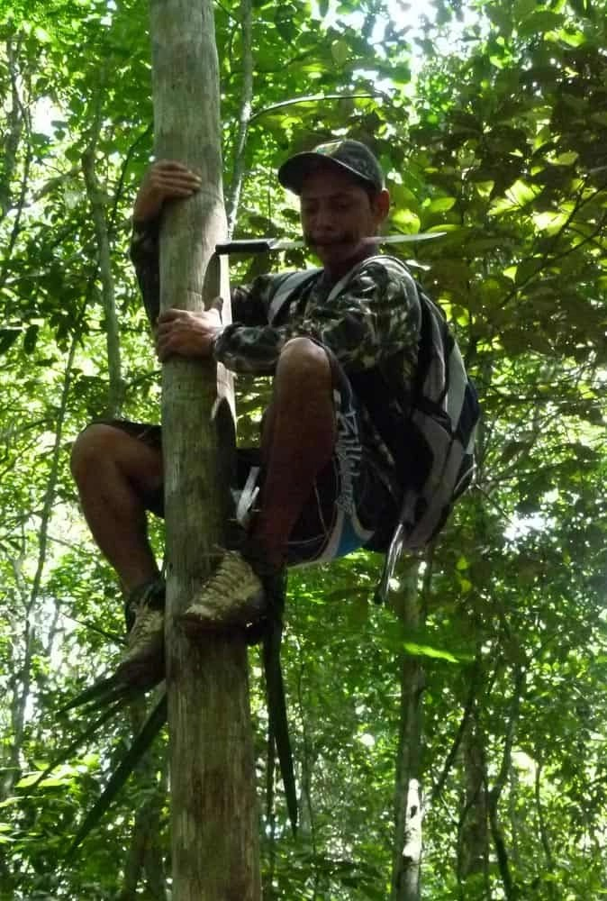 Tree climbing in the Amazon