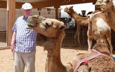 Getting Close to the Camels at the Al Ain Livestock Market