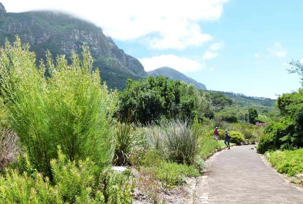 A Walk Around Kirstenbosch Botanical Gardens, Cape Town