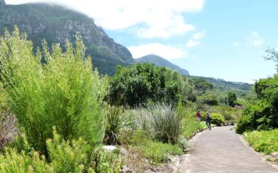 A Walk Around Kirstenbosch Botanical Gardens, Cape Town