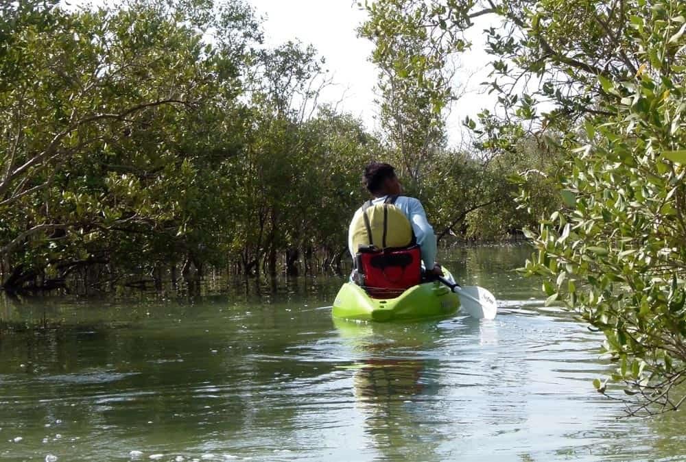 Kayakking through the mangroves