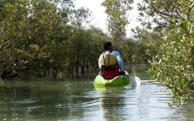 Kayakking Through the Mangroves in Abu Dhabi