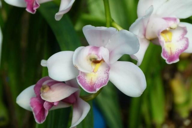 Orchids at Shinjuku National Garden, Tokyo - www.worldwidewriter.co.uk