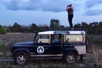Wilde zwijnen safari Veluwe